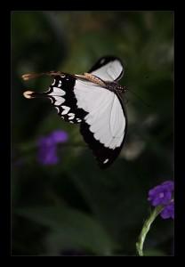 Полёт бабочки