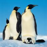 Антарктида. Покорение и научная ценность.
