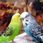Давно ли на Земле живут попугаи?