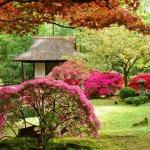 Удивительный сад.
