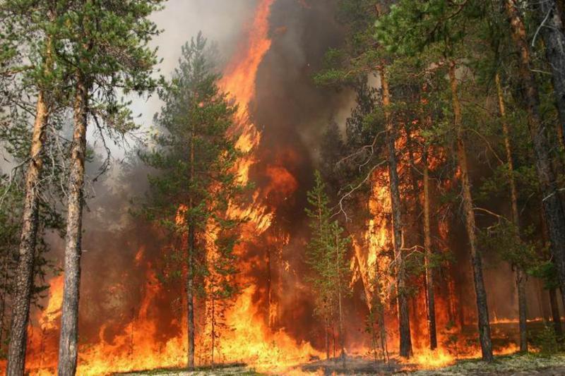 Пожар в лесу