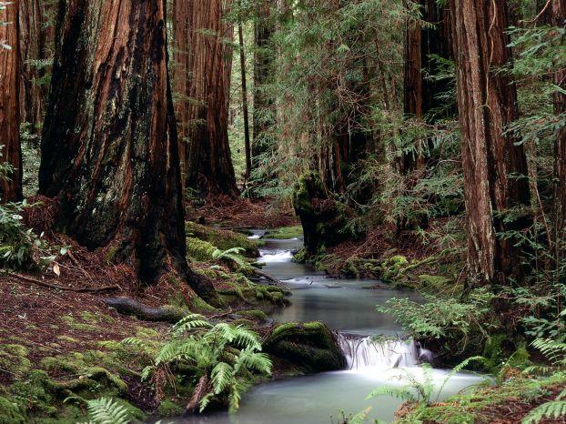 Виды леса