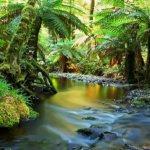 Растительность саванн Австралии