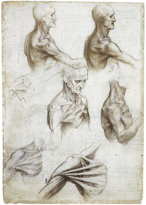 анатомия да винчи