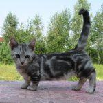 Кошки и клевер