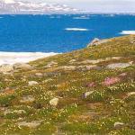 Как образовалась арктическая тундра?