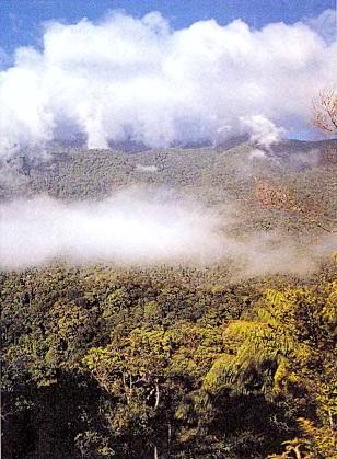 Деревья экваториальных лесов