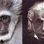 Отличие человека от животного