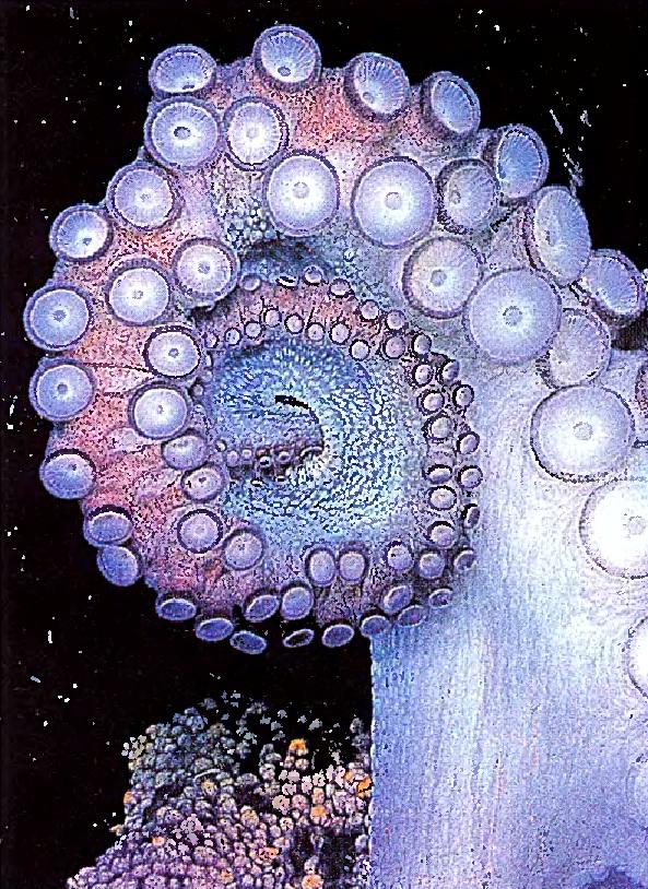 Щупальце осьминога