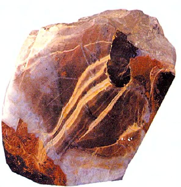 Скелет простейших