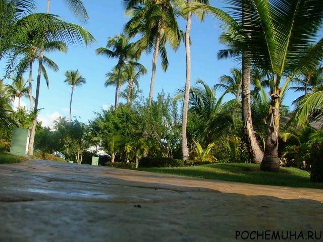 Тропический климат