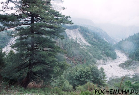Зона хвойных лесов