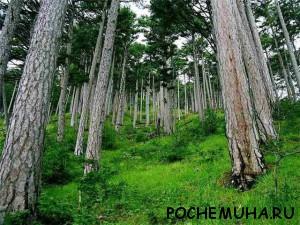 Какие растения растут в лесу