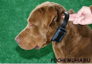 электроошейники для собак