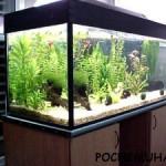 Кто придумал аквариум?