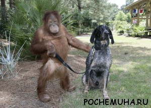 животные друзья