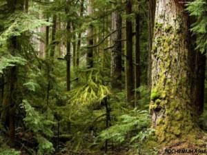 Когда человек занялся сохранением лесов