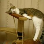 Почему кошки не спят по ночам?