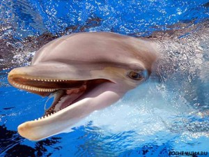 Этот загадочный язык дельфинов