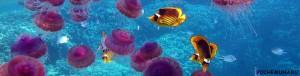 Аквариум с медузами предлагается по очень доступной стоимости