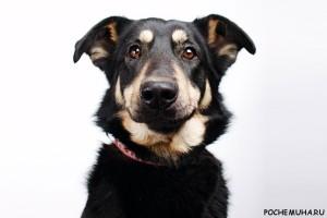 Стоит ли заводить дома беспородную собаку?