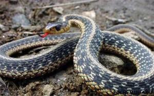 Самые страшные змеи