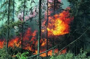 Как уберечь себя при возникновении лесных пожаров