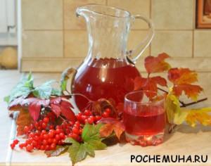 Кисти плодов калины и напитки из ягод