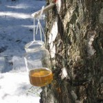 Чем полезен берёзовый сок?