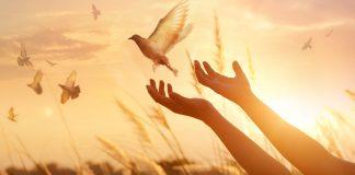 Почему желание быть свободным так ценно в обществе?